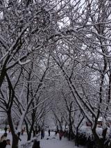 Tree avenue looking beautiful!