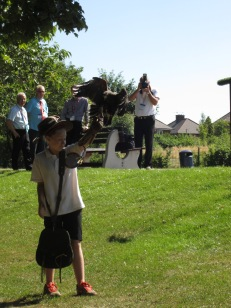 Falconry Display 2013