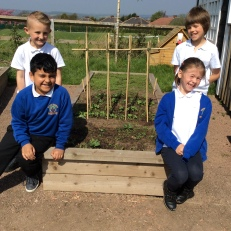 The peas will live climbing this frame.